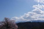 桜と八ヶ岳25%.jpg